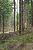 A sustainably-managed Swedish forest.