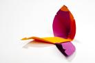 Gewinner Verpackung: Tulipa