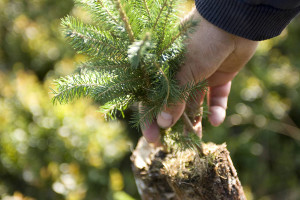 tree_seedling_s
