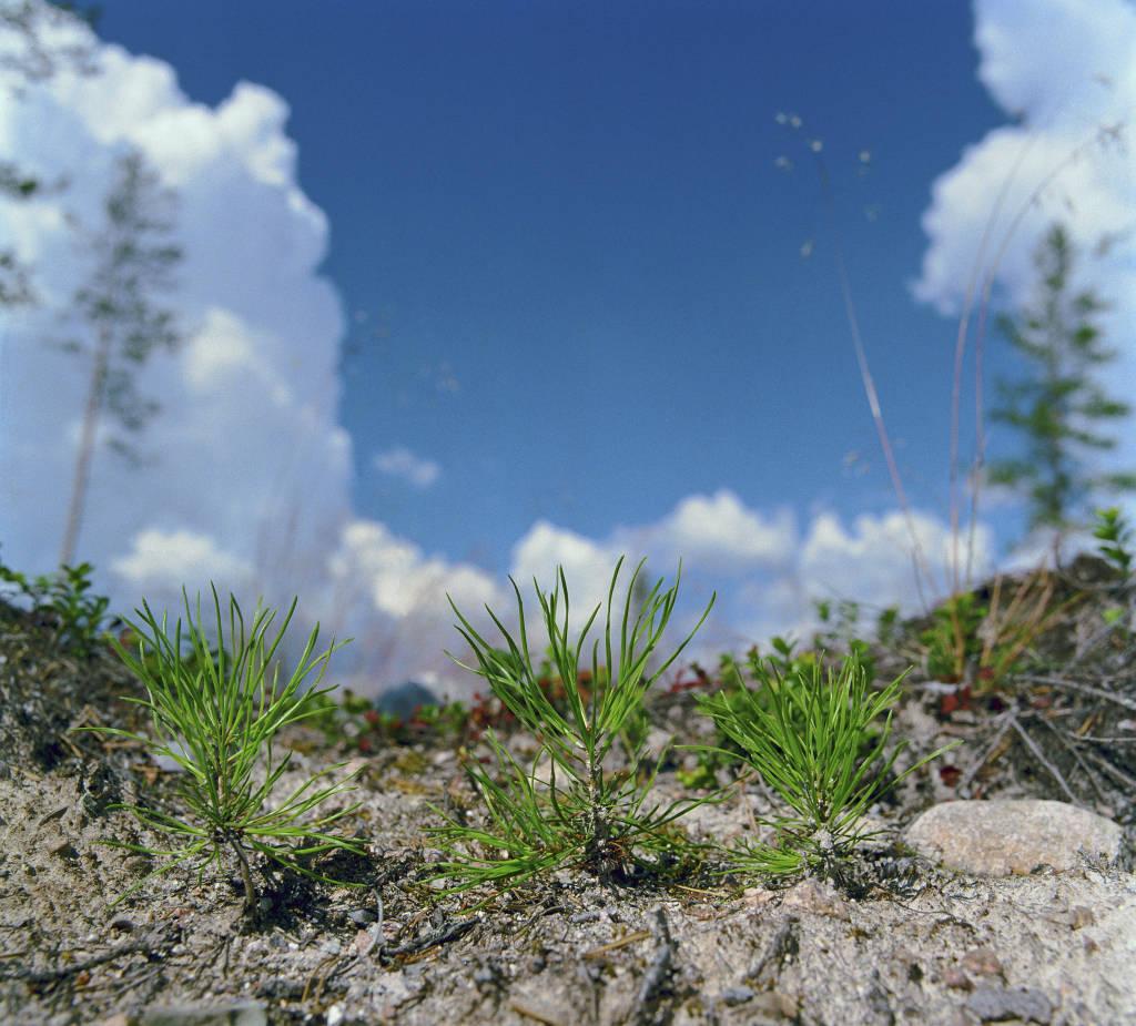 Plants Plantor_