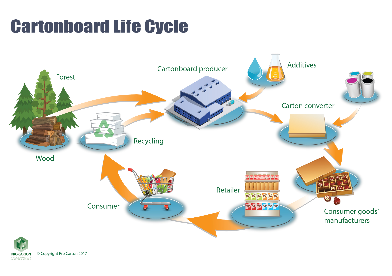 Carton Life Cycle Chart