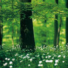 Forests – a basis for life