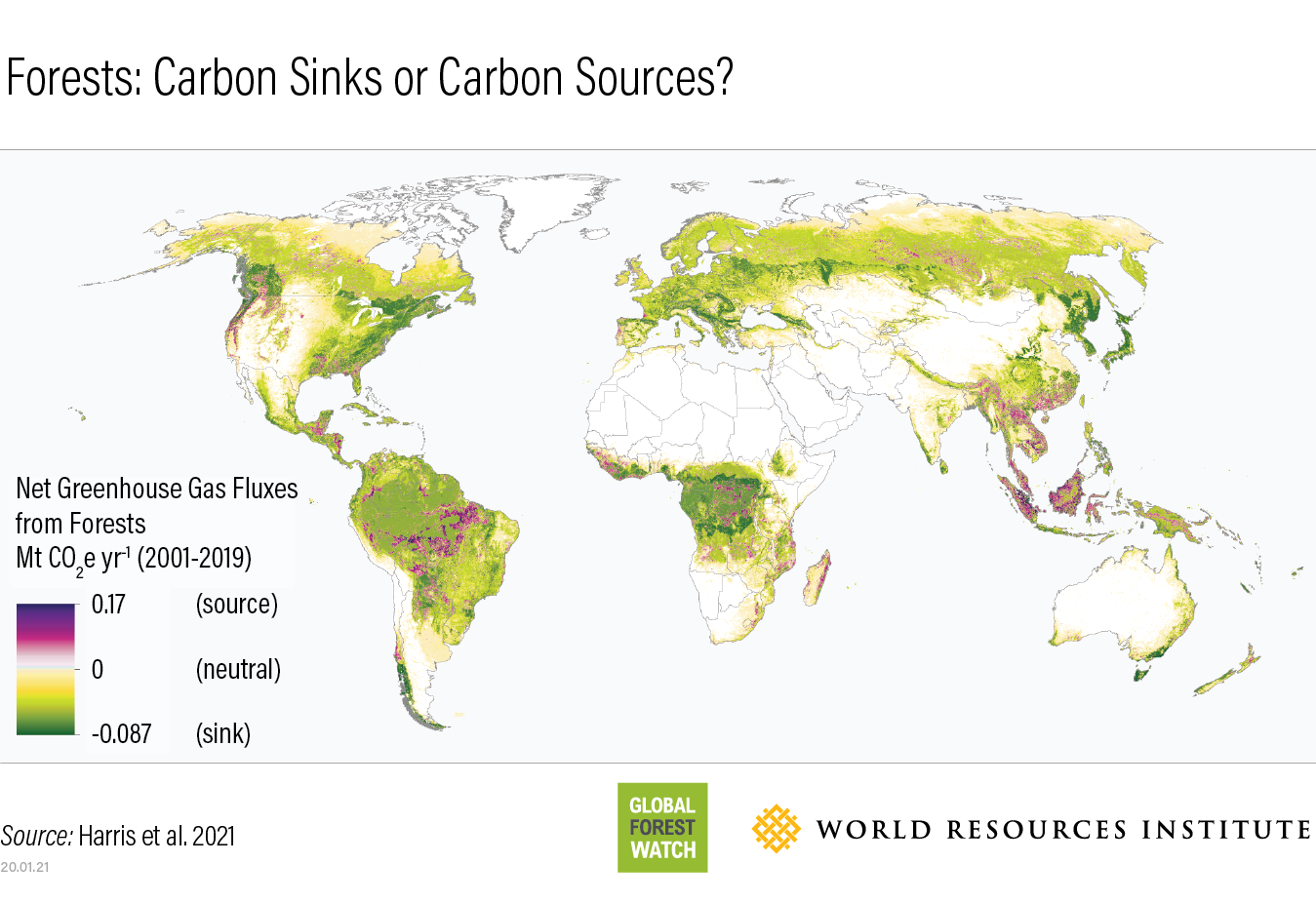 Forests Absorb Twice As Much Carbon As They Emit Each Year